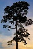 Albero della siluetta Fotografia Stock Libera da Diritti