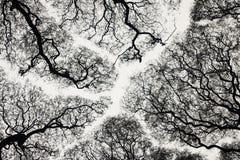 albero della siluetta Fotografia Stock
