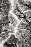 albero della siluetta Immagini Stock Libere da Diritti