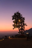 Albero della siluetta con luce d'attaccatura sopra Fotografie Stock
