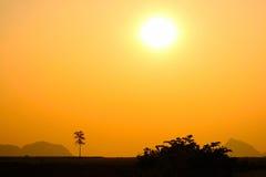 Albero della siluetta contro il sole ed il cielo della montagna Fotografia Stock Libera da Diritti