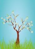 albero della sorgente Fotografia Stock
