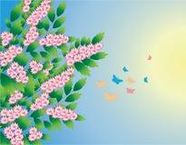 Albero della sorgente con le farfalle Fotografie Stock Libere da Diritti