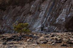 Albero della spiaggia rocciosa Immagine Stock Libera da Diritti