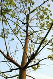 Albero della spina Fotografie Stock