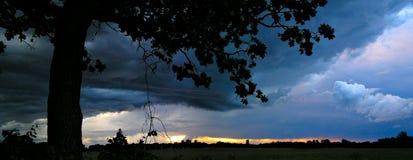 Albero della tempesta fotografie stock libere da diritti