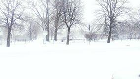 Albero della tempesta di inverno del parc della neve immagini stock