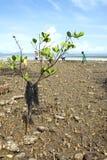 Albero delle mangrovie di inquinamento sulla linea costiera Immagini Stock Libere da Diritti