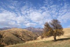 albero delle montagne sole Fotografia Stock Libera da Diritti