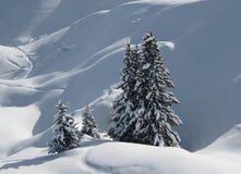 Albero dello Snowy Fotografie Stock