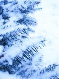 Albero dello Snowy Immagine Stock