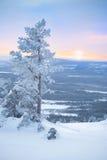 Albero dello Snowy alla mattina inverno/di alba Fotografie Stock