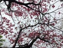 albero dentellare dei fiori Fotografia Stock Libera da Diritti
