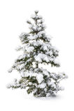 Albero di abete coperto di neve immagine stock