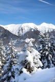 Albero di abete di Snowy in montagna Immagine Stock