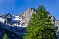 Albero di abete e ` Aosta, Italia di Mont Blanc Valle d fotografia stock