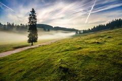 Albero di abete in nebbia dalla strada in montagne ad alba Fotografie Stock Libere da Diritti