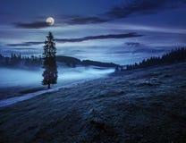 Albero di abete in nebbia dalla strada in montagne alla notte Fotografia Stock