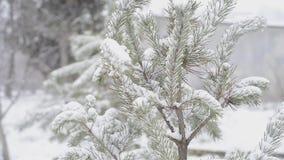 Albero di abete nell'inverno stock footage