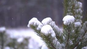 Albero di abete nella neve stock footage