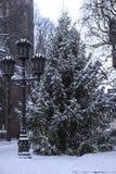 Albero di abete nella vecchia città di Riga Fotografie Stock Libere da Diritti