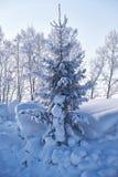 Albero di abete sotto la brina nel campo di neve nella stagione invernale Immagini Stock Libere da Diritti
