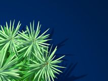 Albero di abete su priorità bassa blu Fotografia Stock