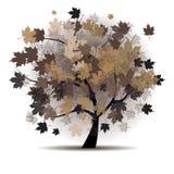 Albero di acero, caduta del foglio di autunno Fotografia Stock Libera da Diritti