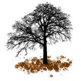 Albero di acero, caduta della foglia di autunno, illustrazione Immagini Stock