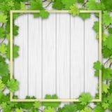 Albero di acero della pagina su fondo di legno Fotografia Stock Libera da Diritti