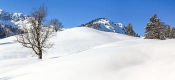 Albero di acero isolato in neve profonda Paesaggio di inverno delle montagne il chiaro giorno soleggiato Fotografie Stock Libere da Diritti