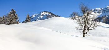 Albero di acero isolato in neve profonda Paesaggio di inverno delle montagne il chiaro giorno soleggiato Fotografia Stock Libera da Diritti