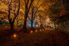 Albero di acero nel festival di illuminazione a Nashi Gawa Fotografie Stock