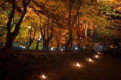 Albero di acero nel festival di illuminazione a Nashi Gawa Fotografia Stock Libera da Diritti