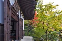 Albero di acero rosso giapponese durante l'autunno in giardino al tempio di Enkoji a Kyoto, Giappone Fotografia Stock Libera da Diritti