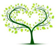 Albero di amore verde Fotografia Stock