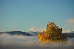 Albero di Aspen che raggiunge attraverso la nebbia Immagine Stock Libera da Diritti