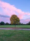 Albero di Autum nel parco Fotografia Stock