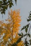 Albero di autunno Immagine Stock Libera da Diritti