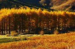 Albero di autunno fotografie stock