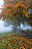 Albero di autunno Immagini Stock Libere da Diritti