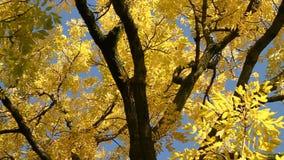 Albero di autunno archivi video