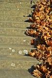 Albero di autunno Fotografia Stock Libera da Diritti