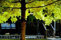 Albero di autunno al cortile Immagini Stock