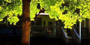 Albero di autunno al cortile Immagini Stock Libere da Diritti