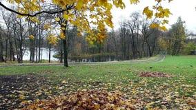 Albero di autunno con fogliame luminoso video d archivio