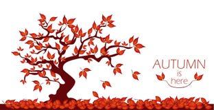 Albero di autunno con i fogli di caduta Immagine Stock
