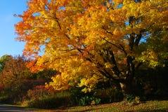 Albero di autunno con l'oscillazione del bambino fotografia stock libera da diritti