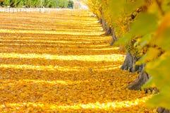Albero di autunno con la bella natura in Nuova Zelanda Fotografie Stock Libere da Diritti