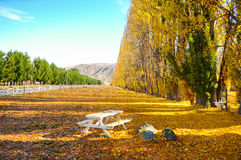 Albero di autunno con la bella natura in Nuova Zelanda Immagini Stock